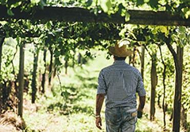 visita-viñedo-torres-quintans